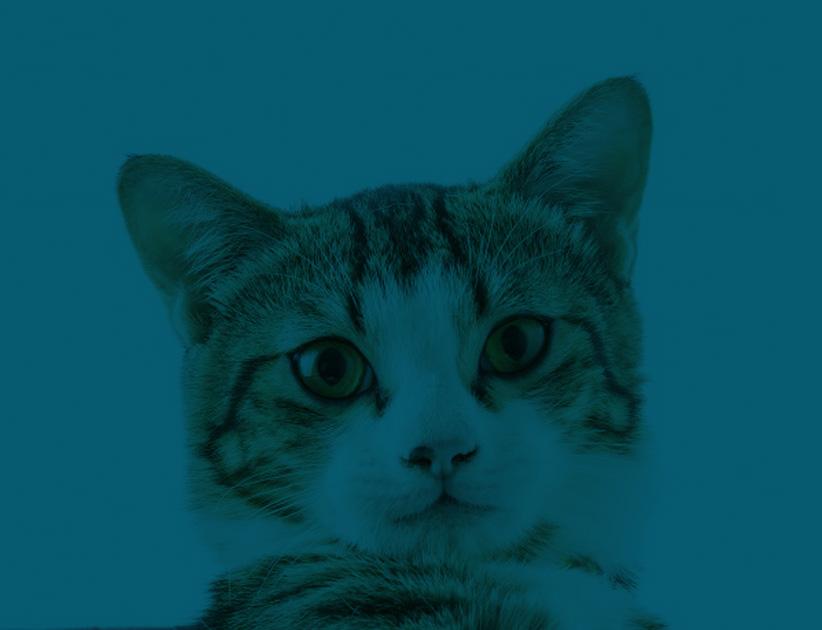 Tips for Feline Patients